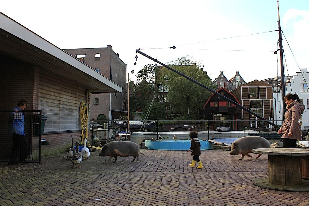 dierencapel