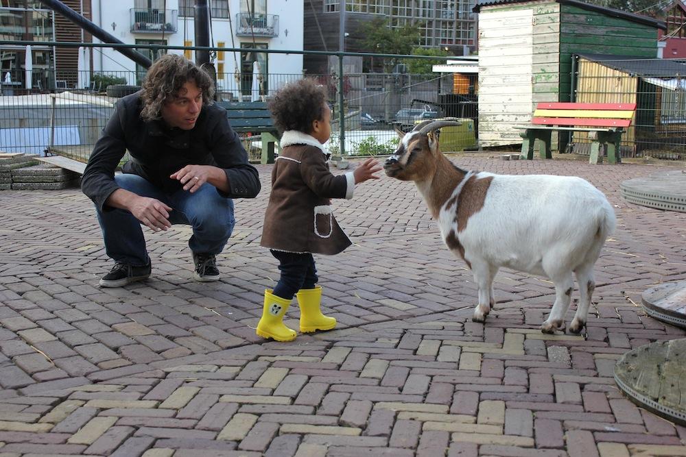 william_mari_goat