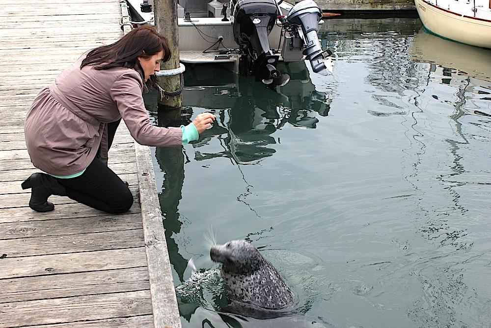 Mama feeding a seal