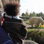 Polar bears are huge!
