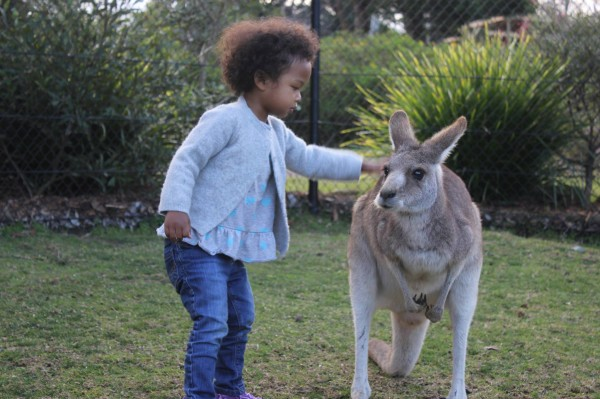 Kangaroos are about my height
