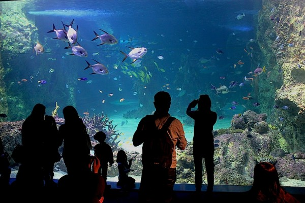 Watching the fish at the Sydney aquarim